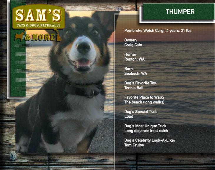 Sams_CatsDogs_THUMPER